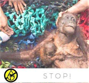 Orangutanų rūšims gresia išnykimas dėl žmonių naikinamų miškų | bepalmiualiejaus.lt nuotr.