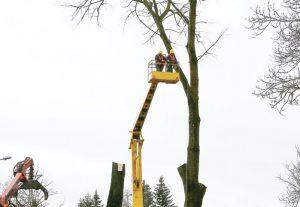 Medžių genėjimas | gzeme.lt nuotr.