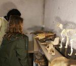 Lankytojai apžiūri archeologinius radinius   E. Daukšaitės nuotr.