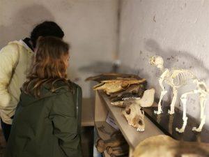 Lankytojai apžiūri archeologinius radinius | E. Daukšaitės nuotr.