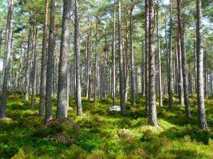 Beveik tūkstantis piliečių už mieste turėtą žemę pasirinko miško plotus kaimo vietovėje | Pixabay nuotr.