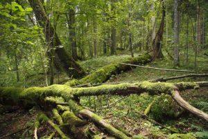 Žaliųjų milžinų paslaptys. Pokalbiai apie medžius | R. Jakaičio nuotr.