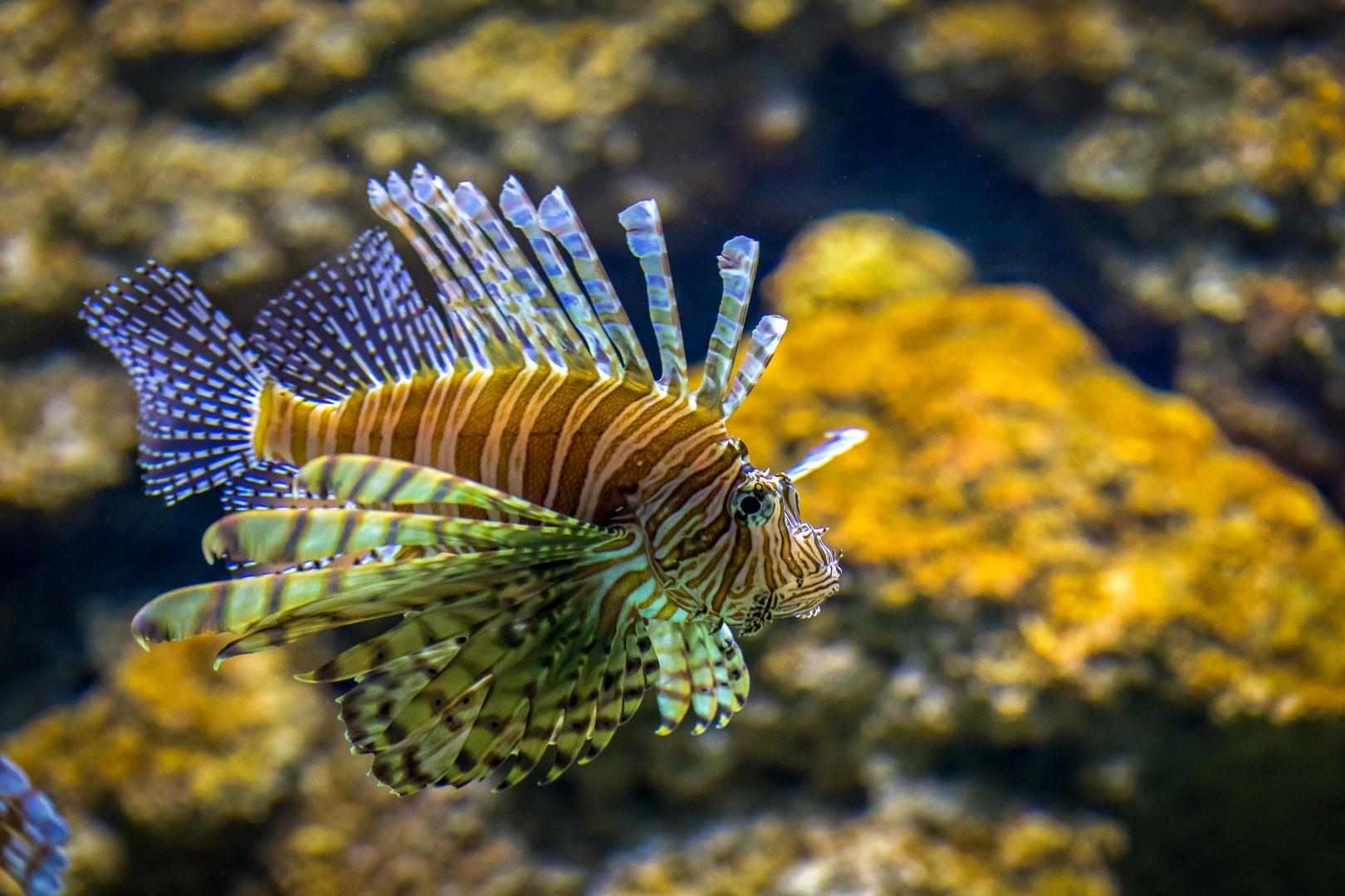 Akvariumas | E. Lasio nuotr.