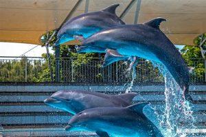 Delfinai saulės įlankoje | E. Lasio nuotr.