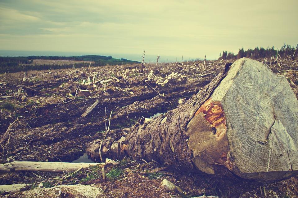 Miškų kirtimas | Pixabay nuotr.
