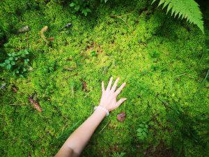 Žmonės ir miškas | gyvasmiskas.lt nuotr.