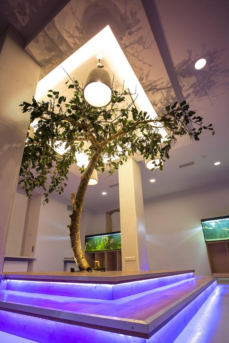 Nuolat žaliuojantis medis | tauragesmuziejus.lt nuotr.