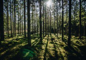 Lietuvos miškai | uzmiskus.lt nuotr.