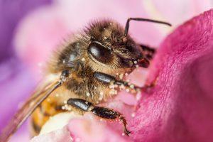 Europoje dramatiškai sumažėjo visų vabzdžių apdulkintojų populiacija ir įvairovė | europa.eu nuotr.