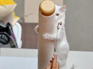 Kačių parodos akimirkos | Alkas.lt, A. Sartanavičiaus nuotr.