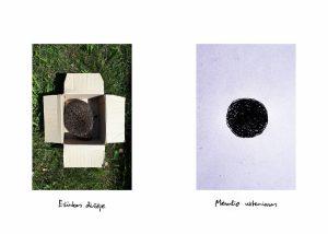 """Vyks Roko Pralgausko fotografijų parodos atidarymas """"Radiniai, sidabro dulkės ir kitos gėlės""""   Vilniaus fotografijos galerijos nuotr."""