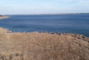Gulbės Metelio ežere | Metelių reg.parko nuotr.