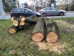 Kertami medžiai Žirmūnuose | G.Kuliešiaus nuotr.