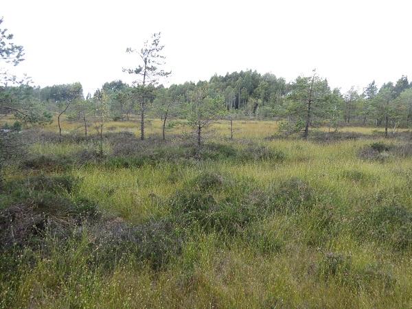 Užpelkiai | Žemaitijos nacionalinio parko direkcijos nuotr.