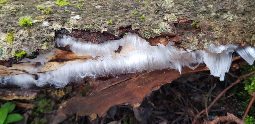 Ledo plaukai | vivmu.lt nuotr.