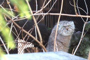 Kokią likusią žiemą pranašauja Lietuvos zoologijos sodo gyvūnai? | lrt.lt nuotr.