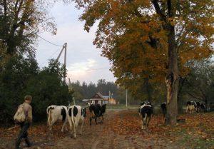Į ganiavą | O. Navikaitės-Drobelienės nuotr.