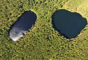 Aukštaitijos miškai | vstt.lt nuotr.