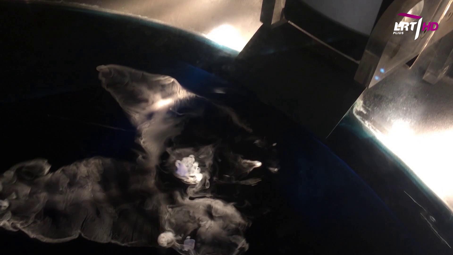 """""""Mokslo sriuba"""": Iš kur atsiranda kometos?   LRT nuotr."""