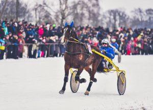 Žirgų lenktynės | V. Pilkausko nuotr.