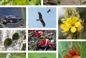 Išrinktas 2020 metų reikalaujančių dėmesio rūšių dešimtukas | lrv.lt nuotr.