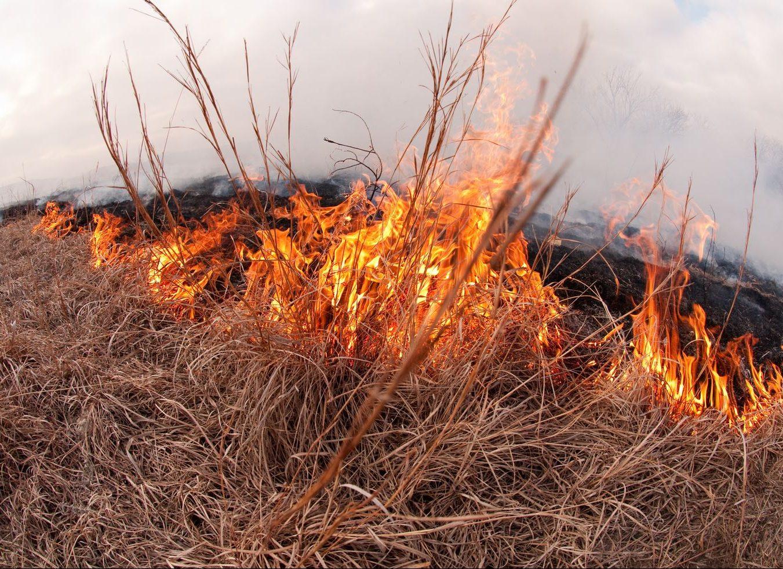 žolės deginimas | k-state.edu nuotr.