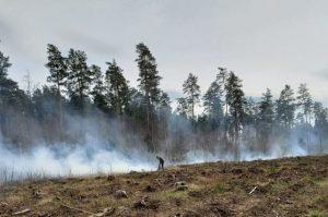 Šventinis savaitgalis miškininkams – gesinant gaisrus | lrv.lt nuotr.