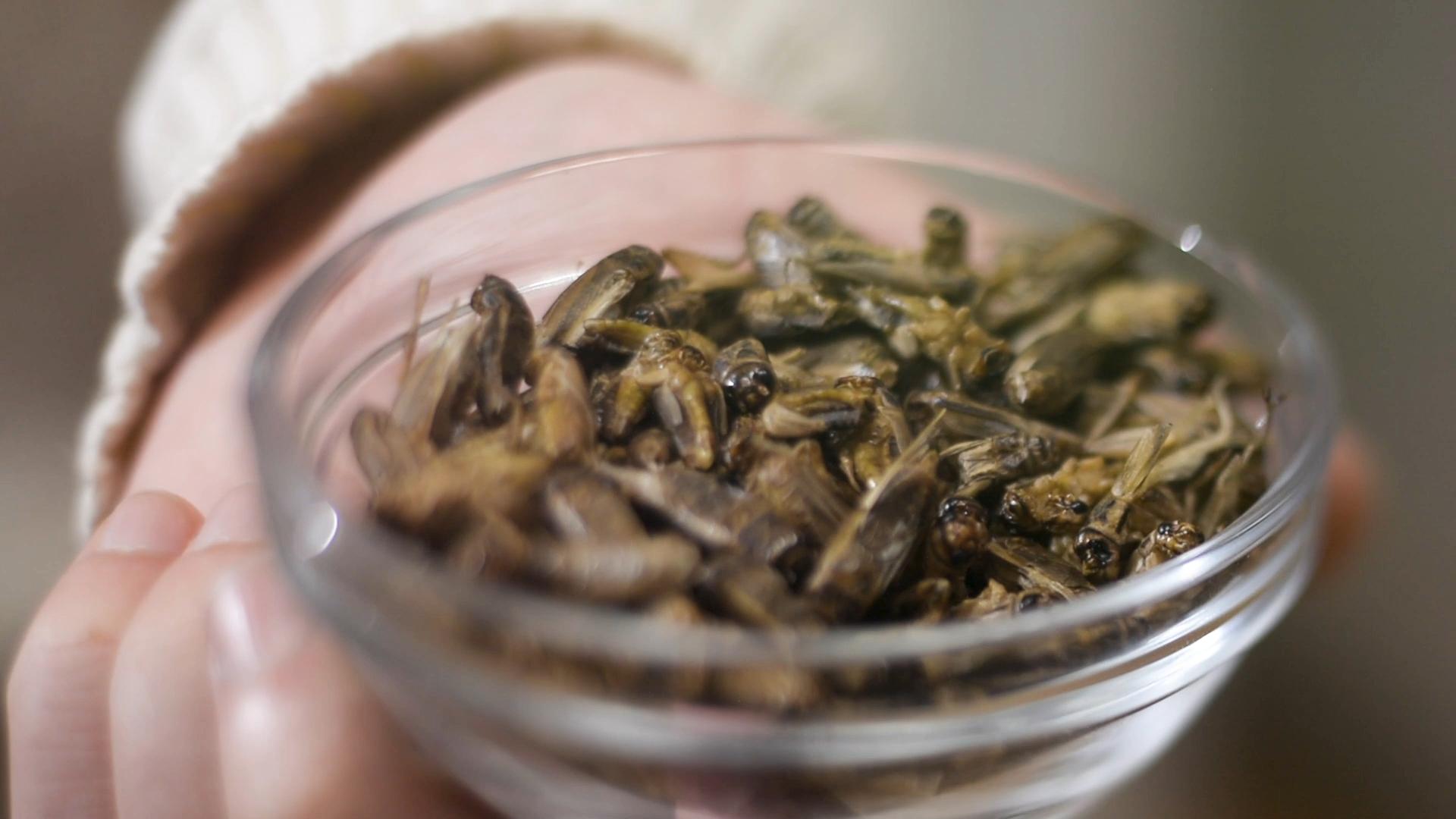 Lietuviški maistui auginami vabzdžiai | LRT nuotr.