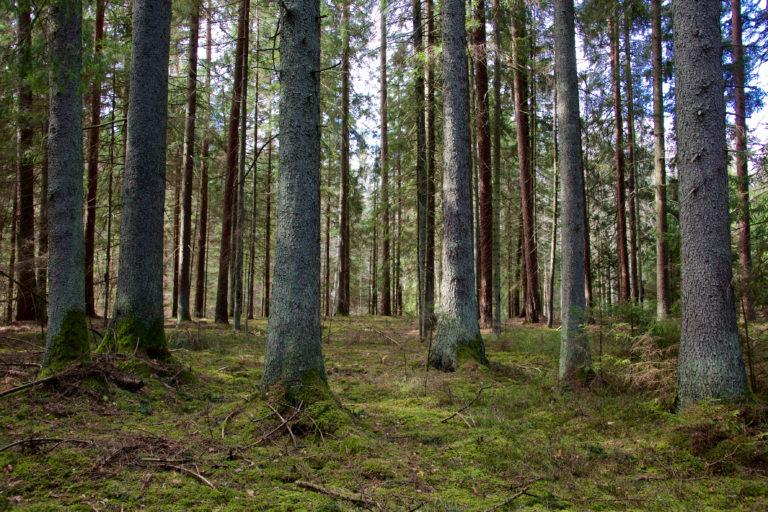 Miškas | vivmu.lt nuotr.