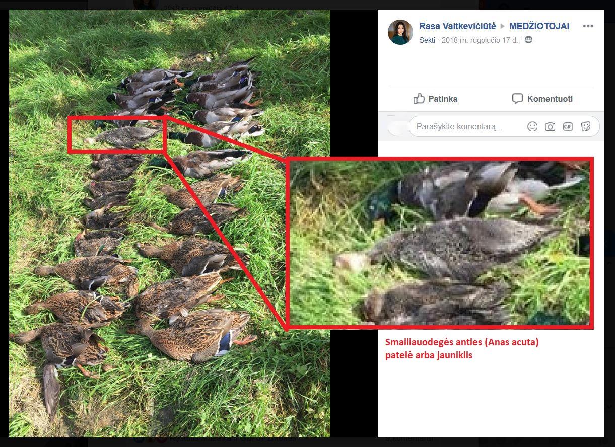 Ornitologų draugijos ekrano nuotr.