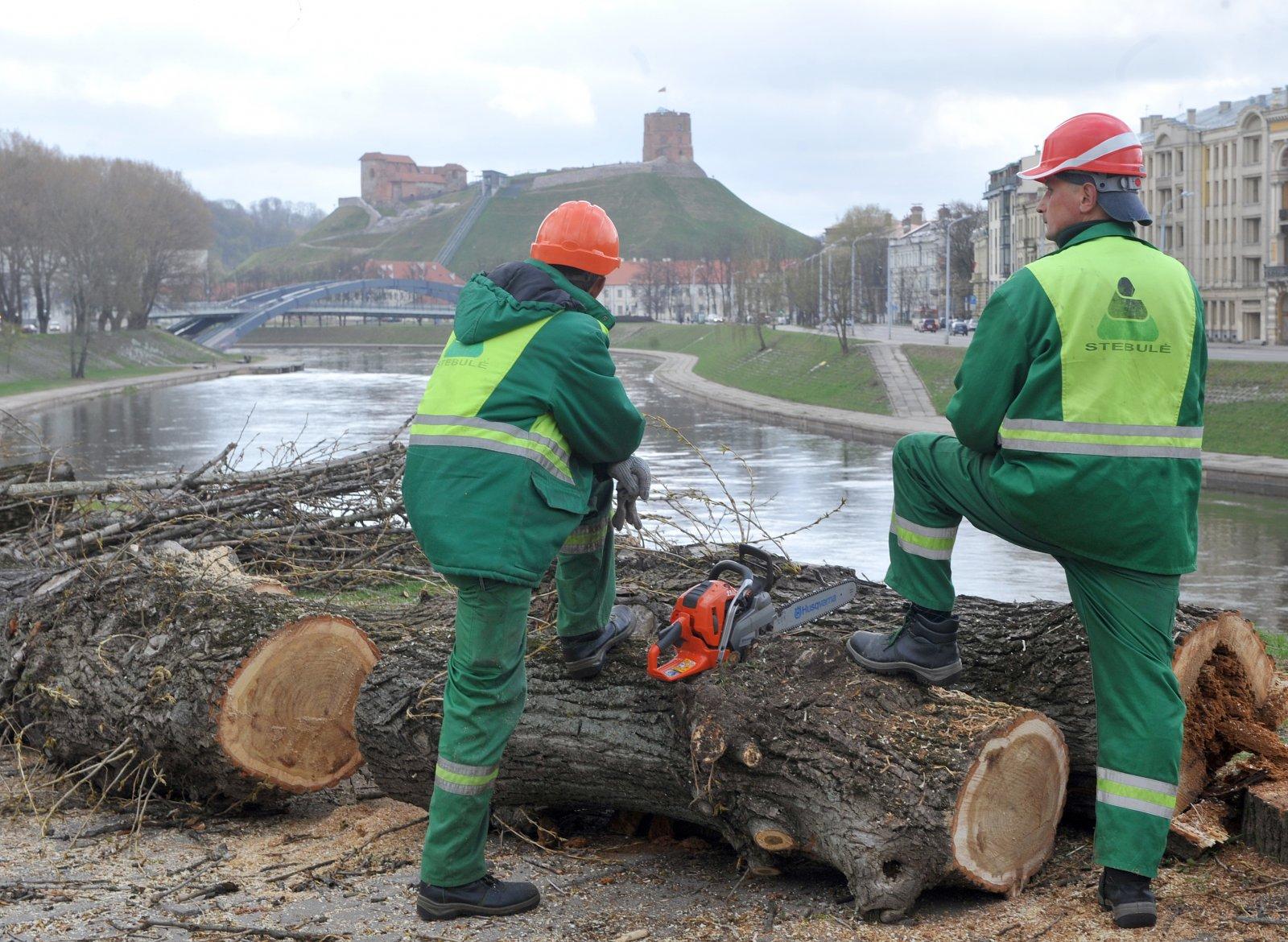 Miškų kirtimas | S. Žumbio nuotr.