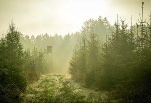 Kviečiama susipažinti su medžioklės taisyklių pakeitimo projektu | lrv.lt nuotr.