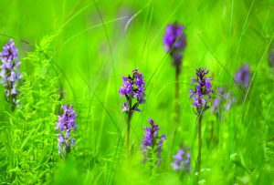 Žolinė – vasaros pabaigos, gamtos turtų ir derliaus šventė   lrv.lt nuotr.
