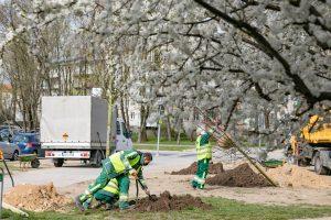 Medžių sodinimas | vilnius.lt nuotr.