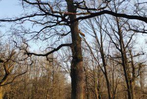 Konferencija apie negyvos medienos svarbą miestuose   lrv.lt nuotr.