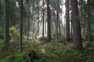 Ažvinčių botaninis zoologinis draustinis | lrv.lt nuotr.