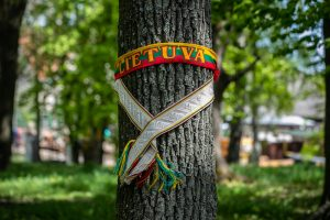 Raginama stabdyti šimtamečių medžių kirtimus greta Vilniaus