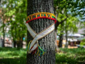 Raginama stabdyti šimtamečių medžių kirtimus greta Vilniaus   lrs.lt nuotr.