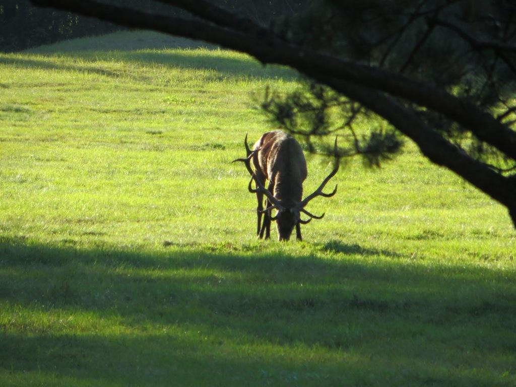 Pro sodybos langą galima stebėti besiganančius elnius. Ir nufotografuoti. A. Butlerio nuotr.
