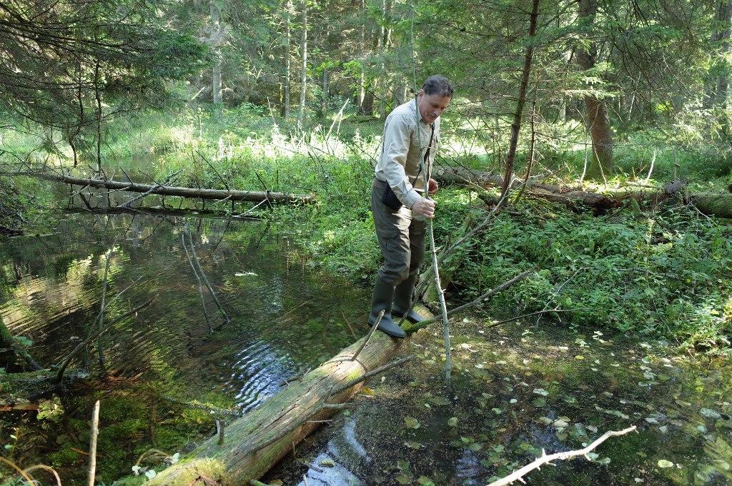 Tokiu būdu patekti į kitą Viešvilės upelio krantą rezervato direktoriui tenka dažnai | F. Žemulio nuotr.