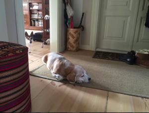 Šunys   austrevicius.lt nuotr.