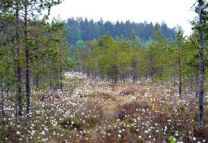 """Natura 2000"" nauda valstybei – 105 mln. eurų kasmet | lrv.lt nuotr."