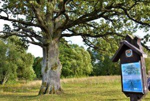 Medžiai – saugojamas gamtos paveldas | lrv.lt nuotr.