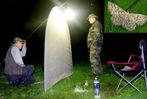 Naktinių vabzdžių stebėjimai | lrv.lt nuotr.
