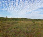 Viešvilės valstybinis gamtinis rezervatas | viesvile.lt nuotr.