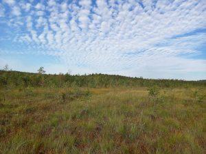 Viešvilės valstybinis gamtinis rezervatas   viesvile.lt nuotr.