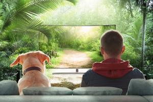 Ar šunys mato ir supranta tai, ką rodo televizorius?   Account Executive Publicum nuotr.