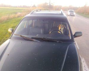 Šuo automobilyje | Klaipėdos policijos nuotr
