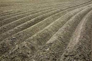 Ištirtos mineralinio azoto atsargos dirvožemyje | lrv.lt nuotr.