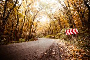 Rudens kelias | Picjumbo nuotr.